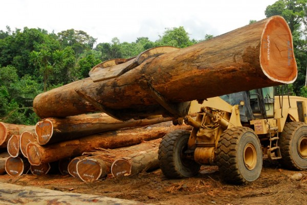abura wood