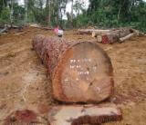 ako wood